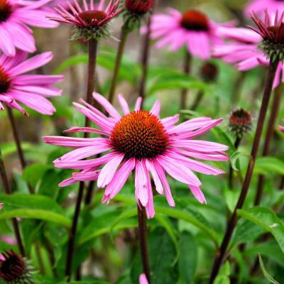 Medicinal Plants 101