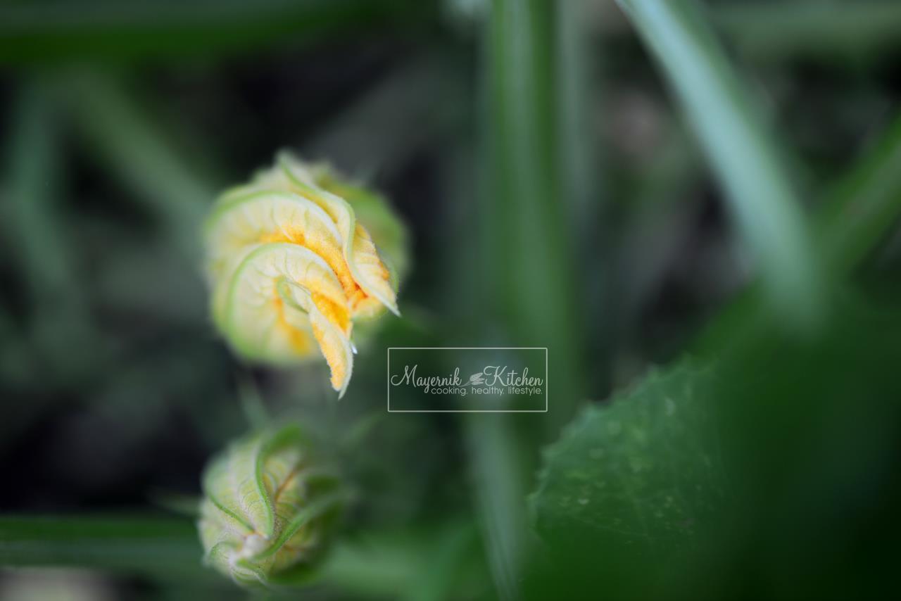 Mid-June Mayernik Garden