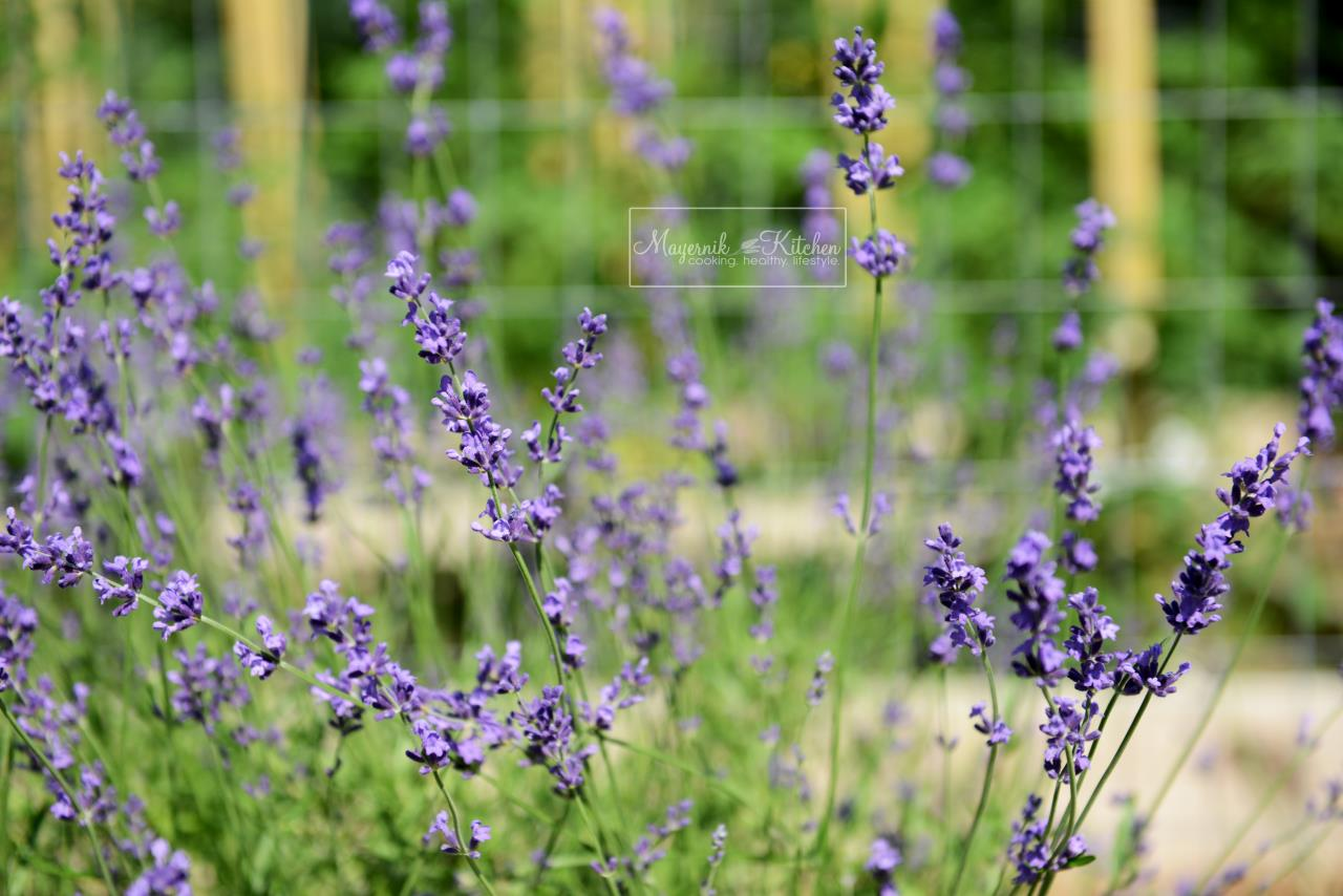 Herb of the Month - Lavender - Mayernik Kitchen