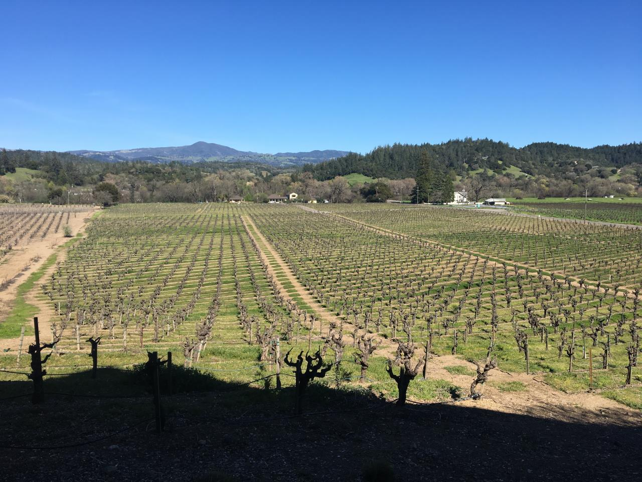 Northern California Wine Country – Travel with The Mayernik's