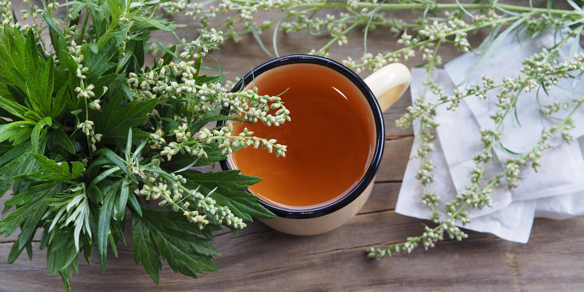 Can you drink Mugwort tea?