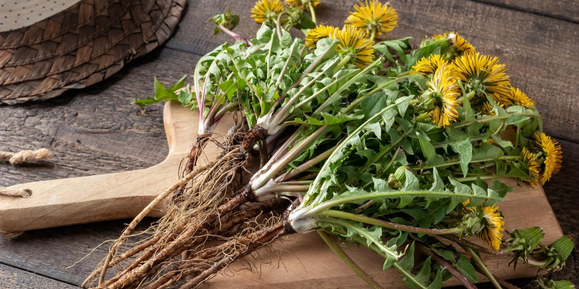 What Herbs can help with Digestion?