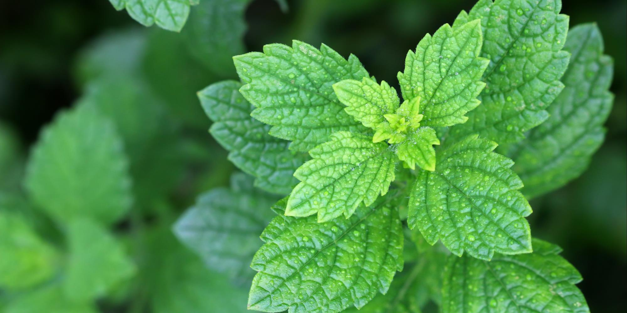 3 Perennial plants you must grow in your garden