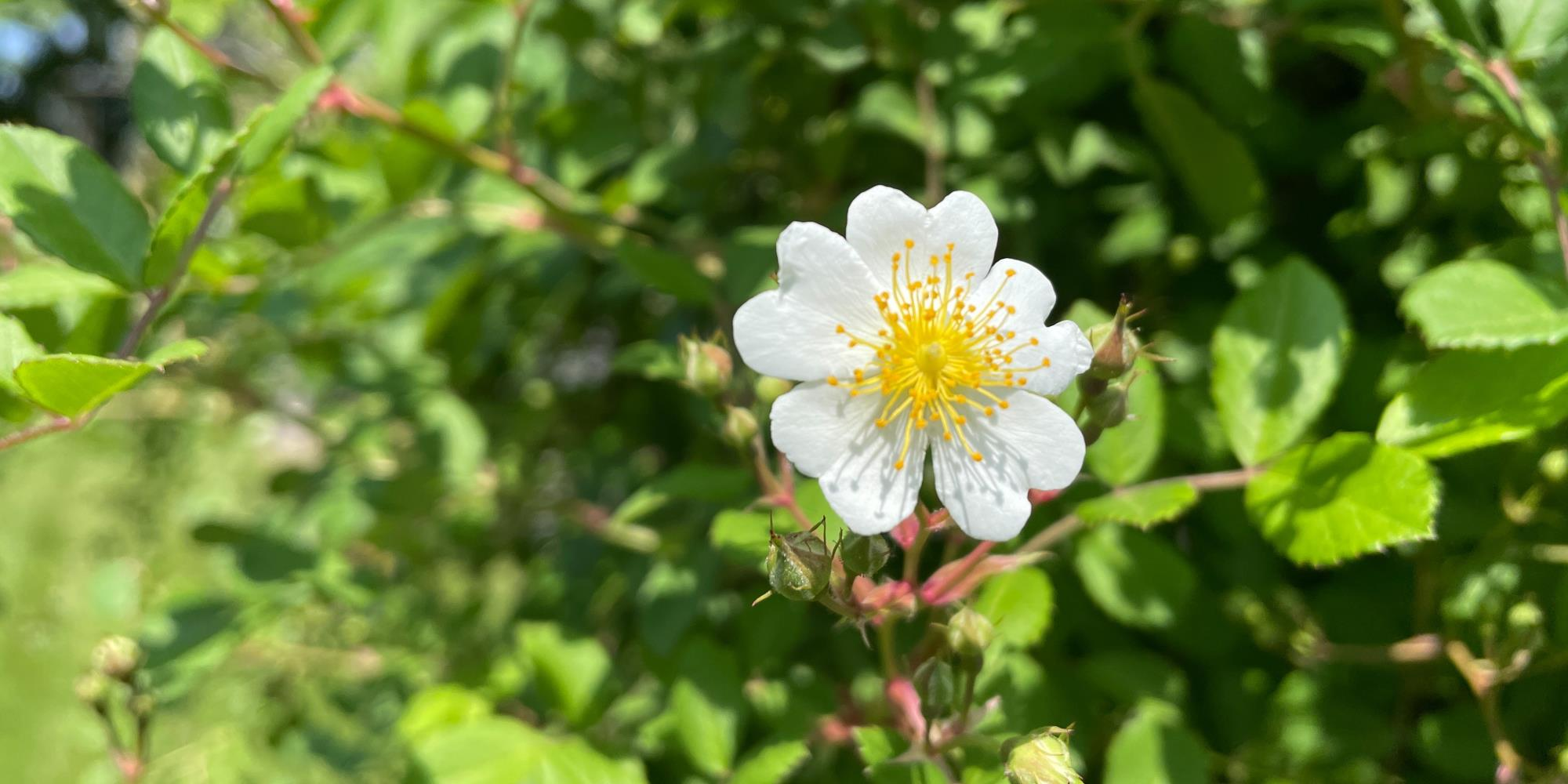 3 Herbs that can be foraged in New Jersey
