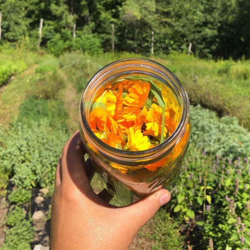 Mayernik Kitchen Herbal Preparation  Intensive