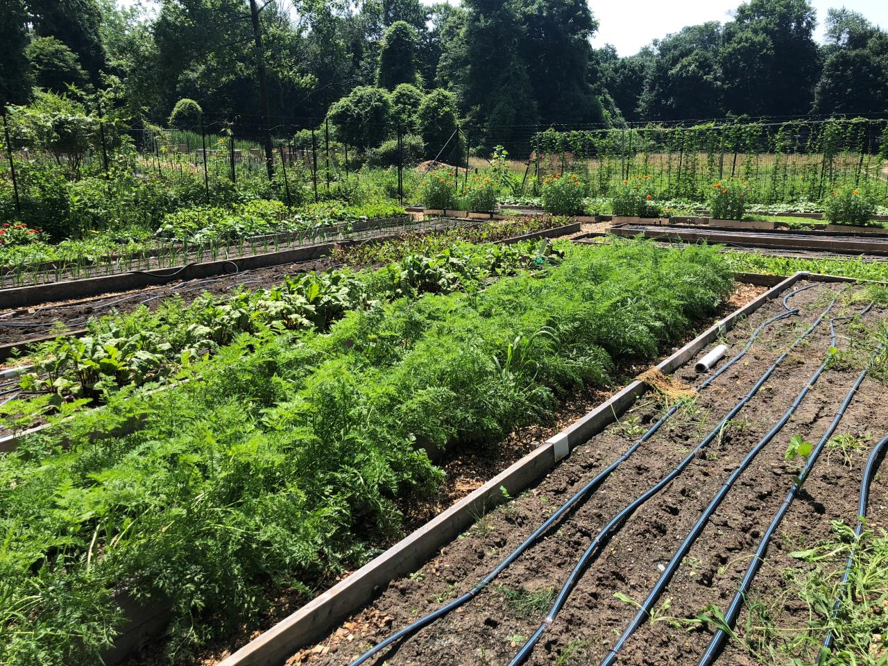 Organic Farm in Cedar Grove New Jersey