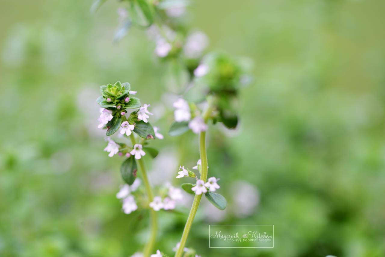 Thyme Flower - Mayernik Garden - New Jersey Gardens