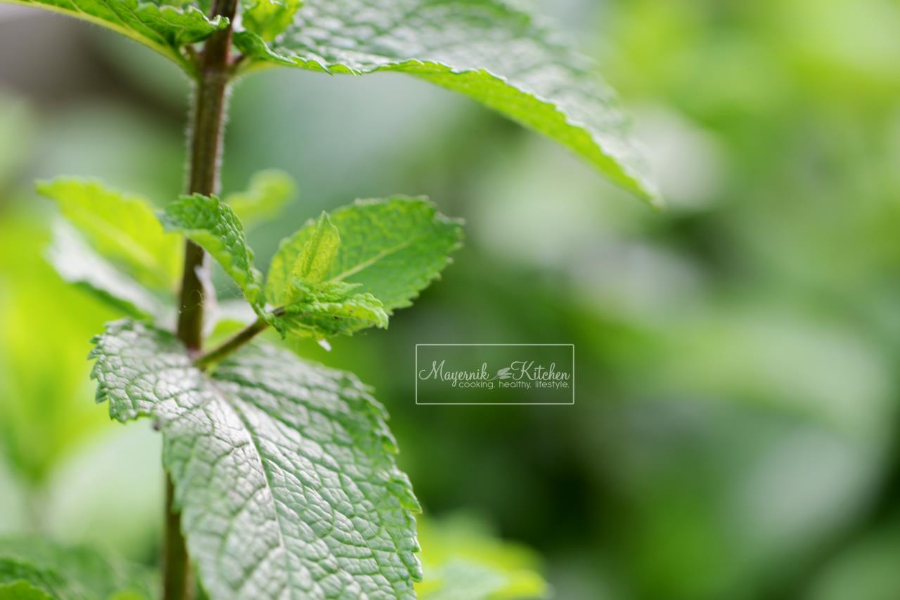 Apple Mint- Mayernik Garden - New Jersey Gardens