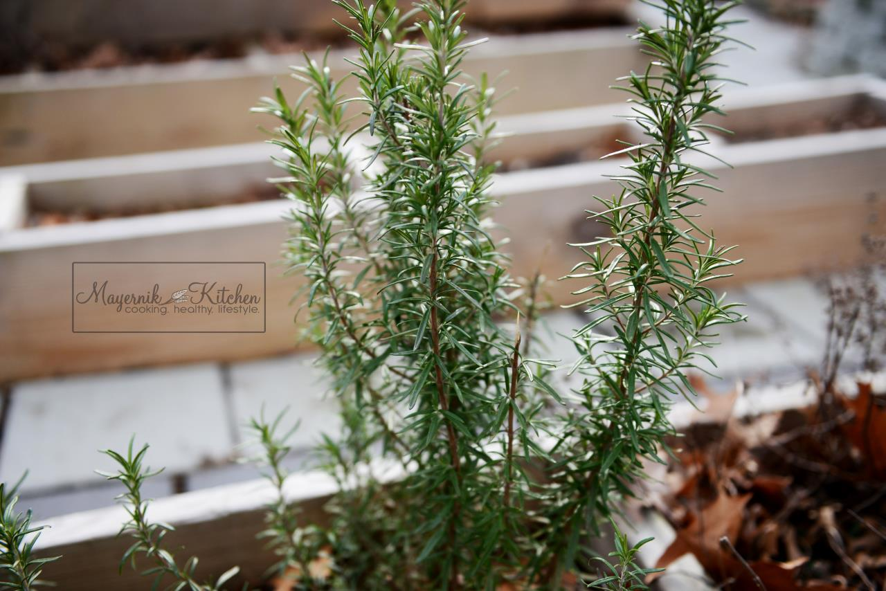 Fresh Rosemary - January 2016 - Mayernik Garden 001