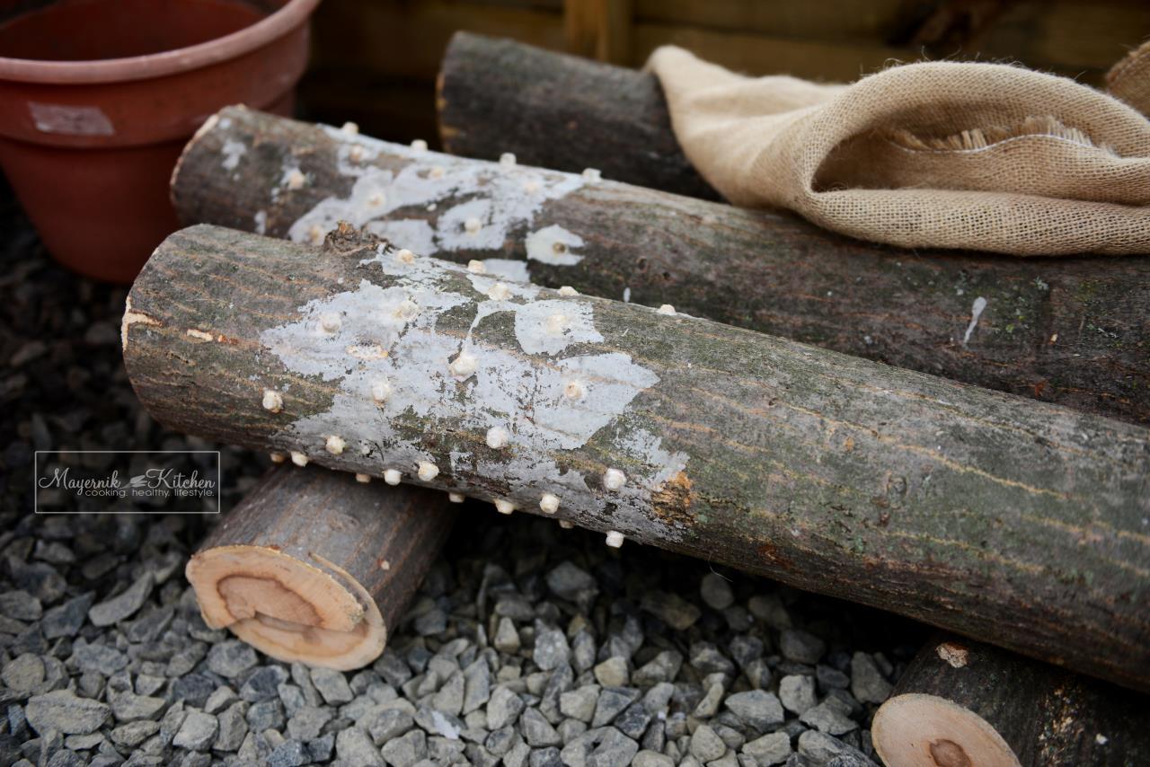 Mushroom Logs - January 2016 - Mayernik Garden 001