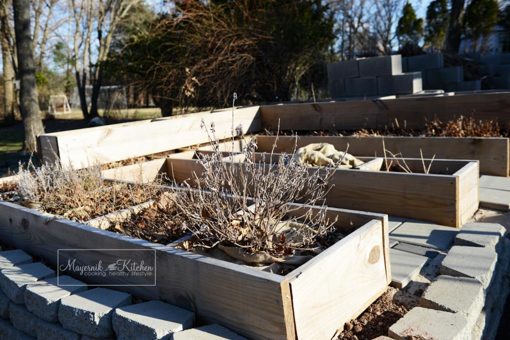 Early Spring Herb Garden - Mayernik Garden