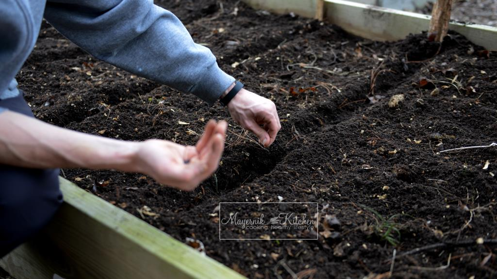 Planting Seeds in Raised Beds - Mayernik Garden