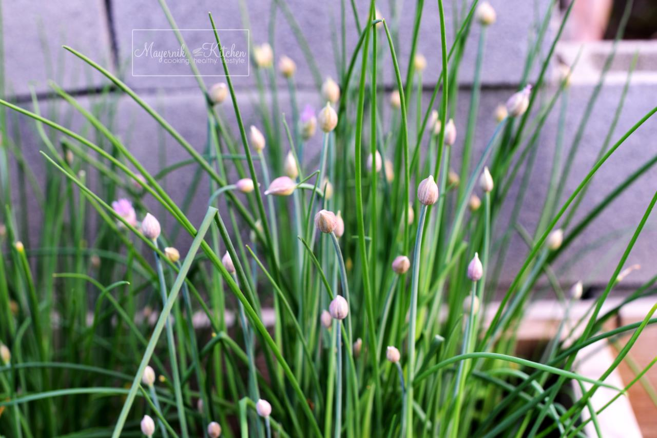 Chives and Chive Flowers - Mayernik Garden - Mayernik Kitchen