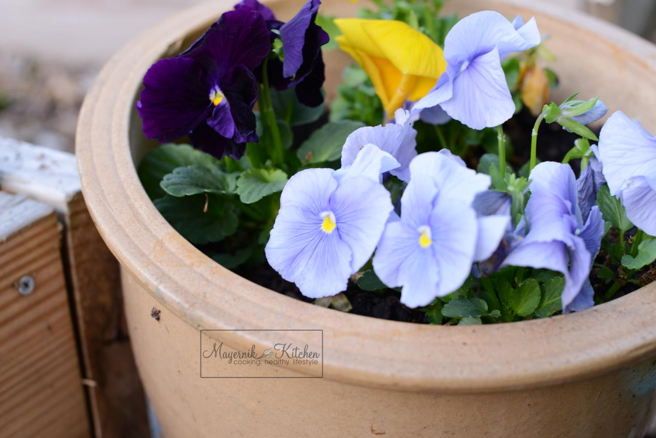 Pansies - Mayernik Garden - Mayernik Kitchen