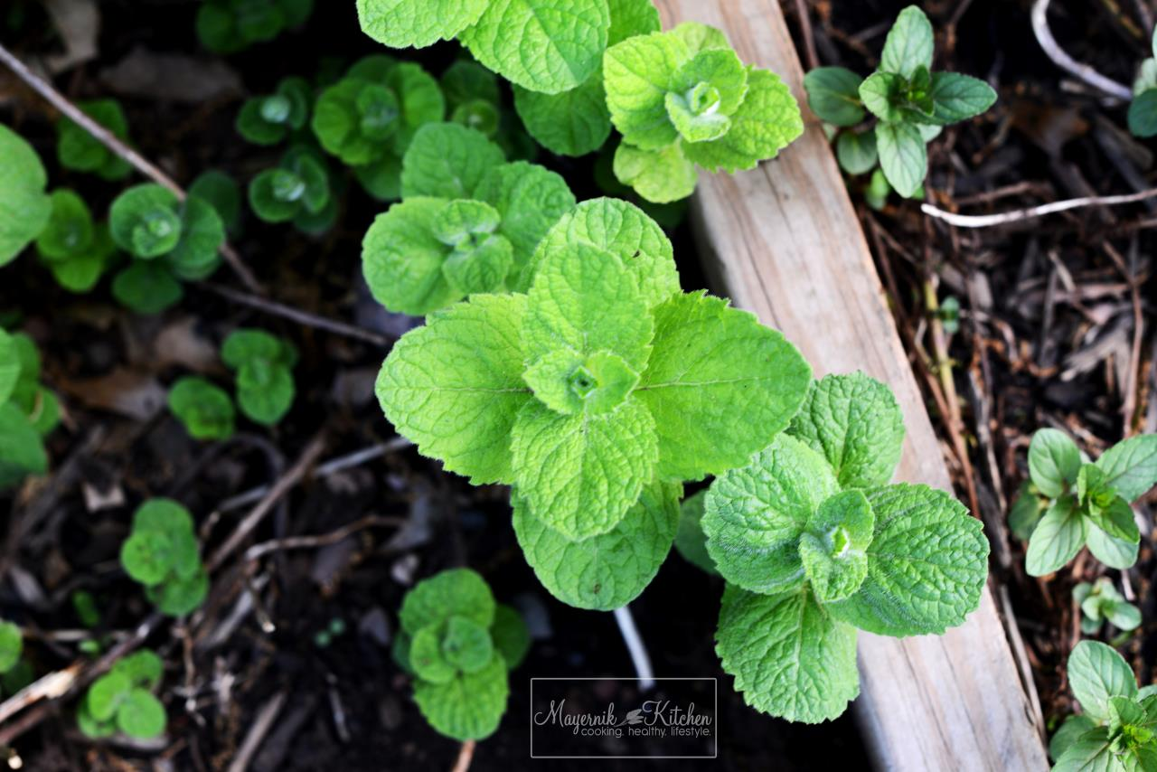 Lemon Balm - Mayernik Garden - Mayernik Kitchen