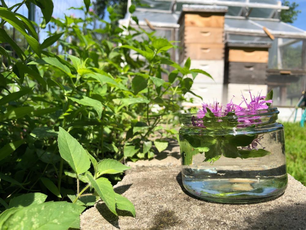 Bee Balm Flower Essence