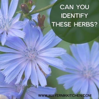 Can you identify these herbs?
