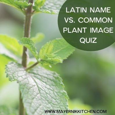 Latin Name vs. Common Plant